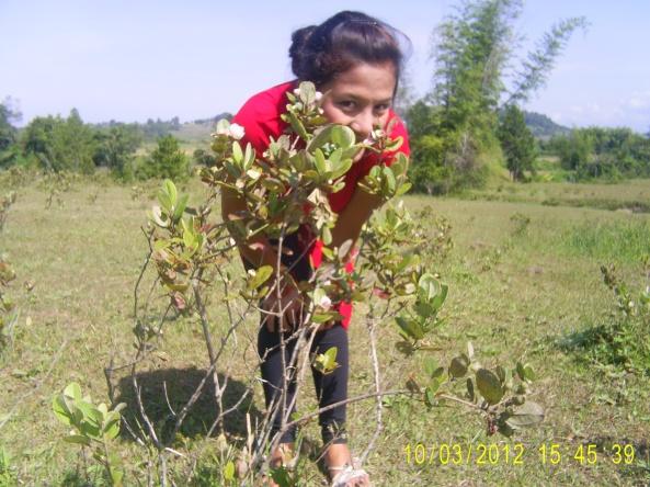 Harimonting5