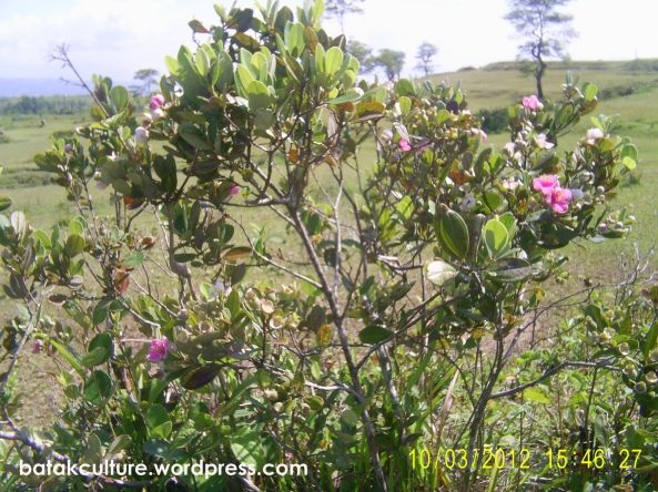 Harimonting Tree