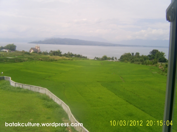 Rice field, view  from Traditional Batak's Museum