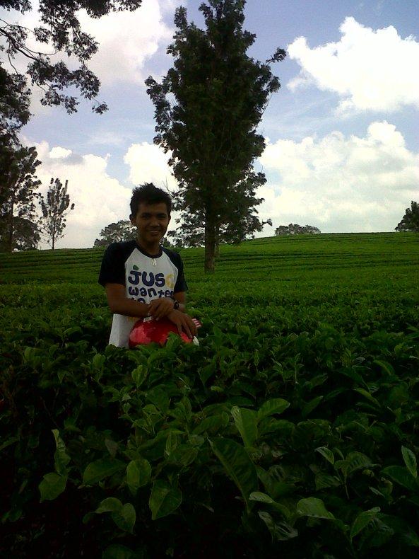 Yanray @ Kebun Teh Sidamanik